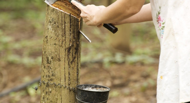 Global Platform for Sustainable Natural Rubber tackling