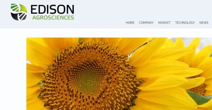 U.S. agro-science firm gets $1 million grant to research sunflower latex