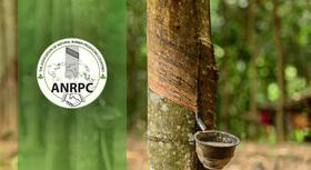 ANRPC: Natural rubber consumption, production outlook