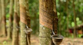 China impacting natural rubber supply, demand