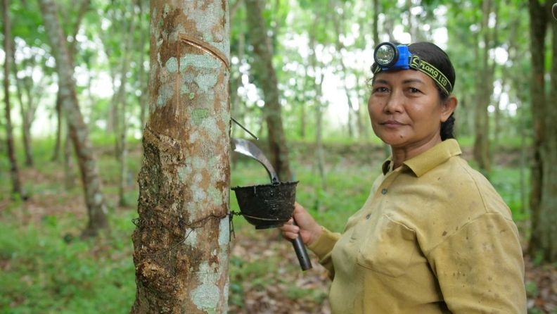 PEFC certification for sustainable natural rubber