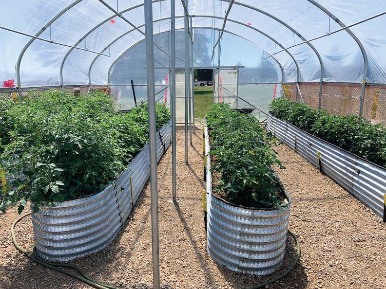 Cancarb greenhouse-main_i.jpg